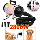 Dog Dryers Review and Comparison
