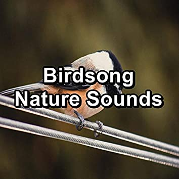 Birdsong Nature Sounds