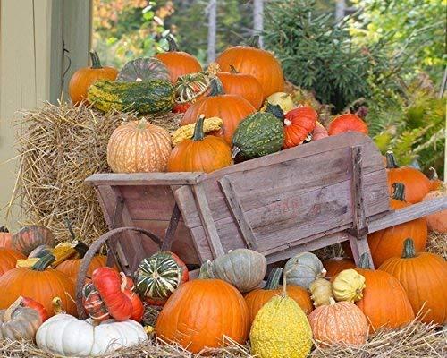 Amazon Com Fall Pumpkin Photograph Pumpkins And Gourds In An Old Wheelbarrow Fall Harvest Autumn Wall Art Fall Decor Handmade