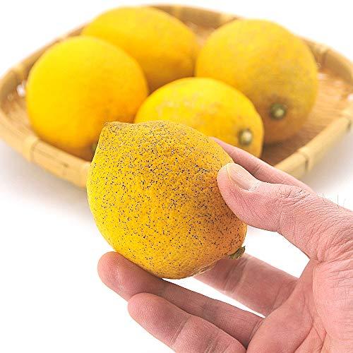 うめ海鮮 愛媛県産 減農薬栽培 訳あり レモン 10kg サイズ未選別 防腐剤 防かび剤不使用