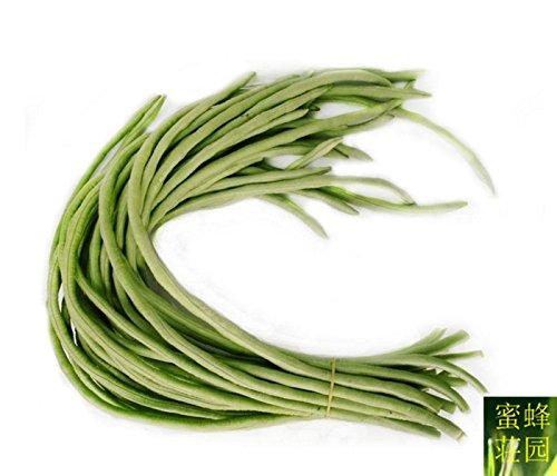 Nouveau été Exclu haricots réguliers Tempéré longue Bean Ginger coin avec 10 graines (dou jiao)
