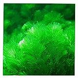 Display08 - 1000 semillas de hierba mixtas para acuario, decoración de acuario, verde agua