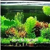 100 semillas de helecho para pecera Java de 22 tipos, planta de acuario de Moss-Live, semillas de plantas Bonsai, envío gratis