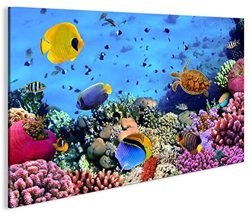 islandburner Bild Bilder auf Leinwand Aquarium Fische Meerwasser Tropische Doktorfische 1K XXL Poster Leinwandbild Wandbild Art up Your Life ®