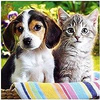5D DIYダイヤモンドモザイク「子猫&子犬」ダイヤモンド絵画クロスステッチダイヤモンド刺繍家の装飾アート番号ラインストーンアクセサリー40x50cmフレームなし