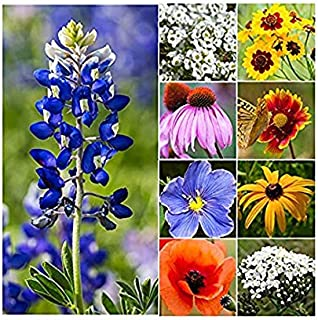30,000 Seeds of Texas & Oklahoma Wildflower Seed Mix - Native Annuals, Perennials and Texas Bluebonnets. Non GMO Seeds.