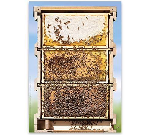 Poster, Motiv Bienen-Beute, Querschnitt in Originalgröße, A1 84 x 60 cm, Geschenkidee für Imker und Bienenfreunde, Bienen Geschenk, Poster, Dekoration, Naturfreunde, Lehrer, Biologie, Insekten