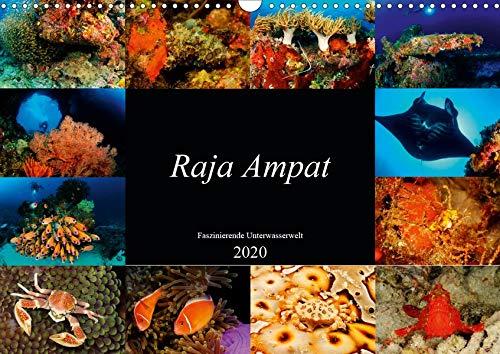 Raja Ampat - Faszinierende Unterwasserwelt (Wandkalender 2020 DIN A3 quer): Tauchen Sie ein in die faszinierende Unterwasserwelt von Raja Ampat, Papua ... (Monatskalender, 14 Seiten ) (CALVENDO Natur)