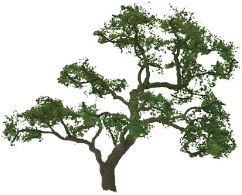 JTT Scenery Products Professional Series  Beech Tree