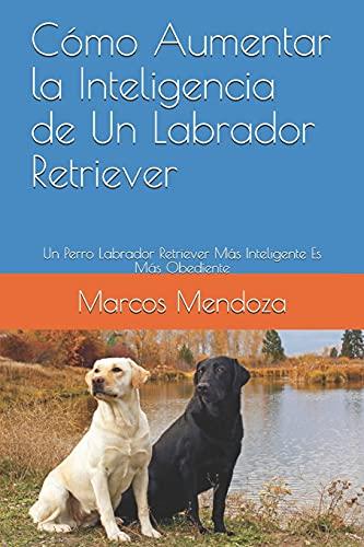 Cómo Aumentar la Inteligencia de Un Labrador Retriever: Un Perro Labrador Retriever Más Inteligente Es Más Obediente