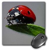 3drose The Ladybug–マクロ、Beetle、バグ、昆虫、Lady Cow、Ladyフライ–マウスパッド、8× 8インチ( MP _ 46778_ 1)