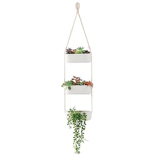Indoor Hanging Garden Amazon Com