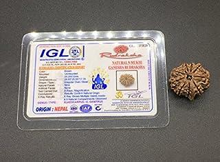 9 Mukhi Ganesh Rudraksha 26.83mm 5.25 GMS Nepal Rudraksha / Natural Nine Face with Ganesh Trunk Rare Bead IGL Certified Ex...