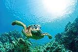 1art1 Unterwasserwelt - Meeres-Schildkröte Über