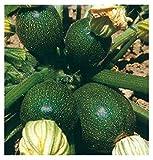 Inception Pro Infinite 50 C.ca Semi Zucchino Tondo di Piacenza - Cucurbita Pepo In Confezione Originale Prodotto in Italia - Zucchine tonde