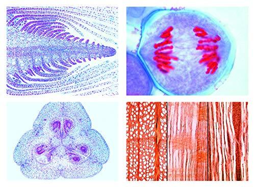 Mikropräparat Serie - Blütenpflanzen (Phanerogamae): Ergänzungsserie