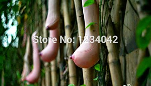 10PC légumes et graines de fruits Melon graines Vietnam graines de melon de lait que la poitrine Bonsai plantes Graines d'une femme