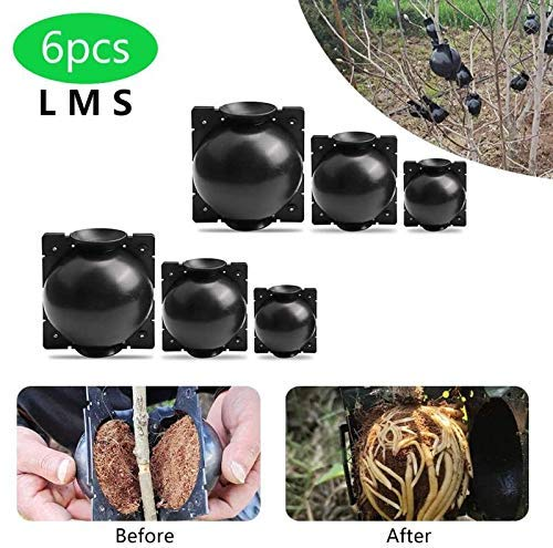 JRY Dorca Grafting Plant Rooting Ball Grafting Box for Garden Roses Fruit Trees Rooting Growing Breeding (6 Pcs Black)
