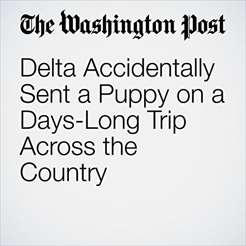 Delta Accidentally Sent a Puppy on a Days-Long Trip Across the Country copertina