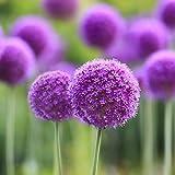 4 quantità da scegliere: 10pcs / bag, 20pcs / bag, 50pcs / bag, 100pcs / bag Varietà: fiore Stile: perenne Occasioni: casa, giardino, all'aperto, ecc. Cerca nel nostro negozio più semi di diversi tipi. Bienveniad!