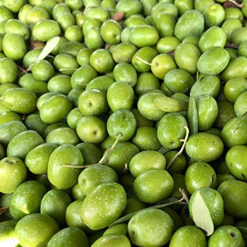 Aceitunas Crudas Verdes para preparar en casa