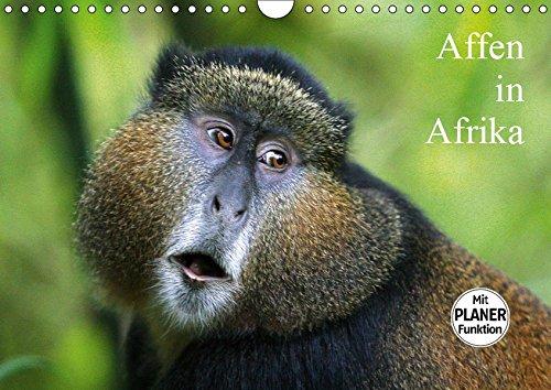 Affen in Afrika (Wandkalender 2019 DIN A4 quer): Affen in ihrem natürlichen Lebensraum (Geburtstagskalender, 14 Seiten ) (CALVENDO Tiere)