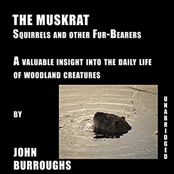 The Muskrat (Unabridged), a valuable insight into the daily life of woodland creatures, by John Burroughs
