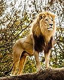 Puzzle 1000 piezas Cuadro de arte de león animal majestuoso puzzle 1000 piezas animales educativo divertido juego familiar para niños adultos Rompecabezas educativo de juguete50x75cm(20x30inch)