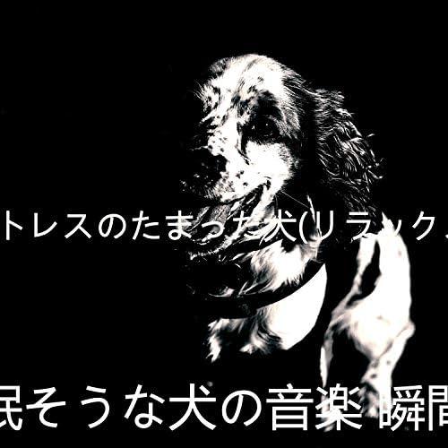 眠そうな犬の音楽 瞬間