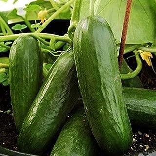 Picolino F1 Hybrid Cucumber Seeds (25 Seeds)