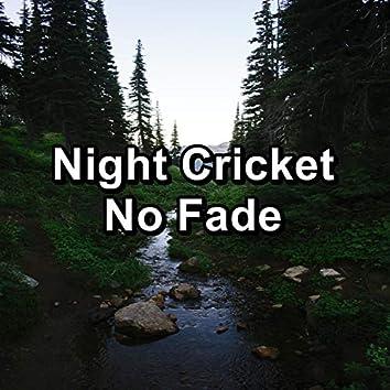 Night Cricket No Fade