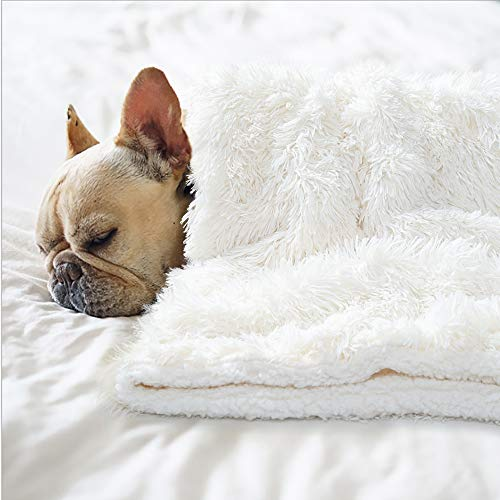 BENRON Premium Fluffy Pet Blanket for Medium Dogs, Fluffy Reversible Sherpa Frenchie Puppy Blankets, Machine Washable, Soft, Warm Pets Throw Blanket 30x40 Inches Cream White