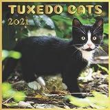 Tuxedo Cats: 2021 Wall Calendar, Animals Cats Monthly Calendar