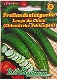 Cetriolo dell'insalata all'aperto cinese (porzione)