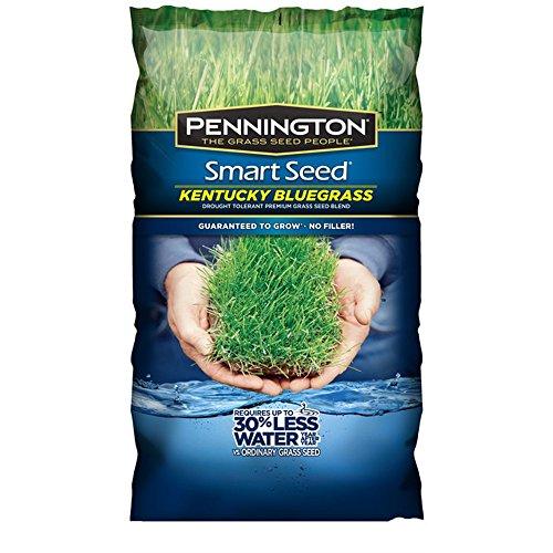 Pennington 100526631 Kentucky Smart Seed, 3 LB, Green