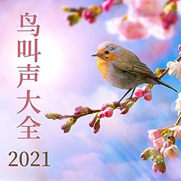 鸟叫声大全2021 - 纯净自然声, 放松冥想静心音乐, 春季冥想
