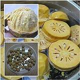 Aegle marmelos Semillas Beal Bengala Quince Golden Apple semillas de frutas de manzana Piedra