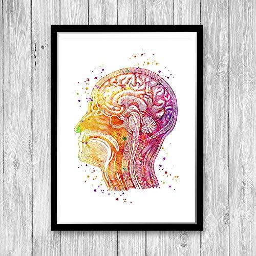 Menselijke hoofd langwerpig anatomie van de menselijke hersenen aquarel kunstdruk medische poster Med Scholl muurkunst anatomische illustratie