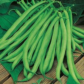 mumut Blue Lake Bean Seeds Heirloom HIGH YIELDING Vegetable Seed