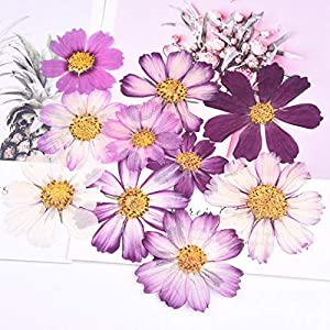 Silk Flower Arrangements Artificial and Dried Flower 1 Bag Cosmos Gesang Flower Dried Flower Embossing Valentine's Day handmadedrip Plastic Phone case Material