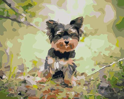 Pintar por Numeros Adultos Yorkshire Terrier Pintura Guiada por Numeros,Niños DIY Pintura por Números con Pinceles y Pinturas- 40 x 50 cm Paint by Numbers Hogar Decoración de Casa(sin marco)