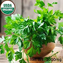 Gaea's Blessing Seeds - Dark Green Italian Parsley Seeds 500+ Non-GMO Seeds Organic Open-Pollinated High Yield Heirloom