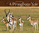 Pronghorn Year: A Visual Tribute to North America's Pronghorn