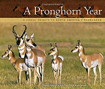 Pronghorn Year  A Visual Tribute to North America s Pronghorn