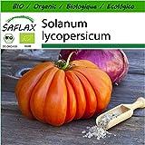 SAFLAX - Ecológico - Tomate - Corazón de buey - 10 semillas - Solanum lycopersicum