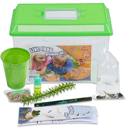 Tadpole to Frog Growing Kit with 2 Live Tadpoles