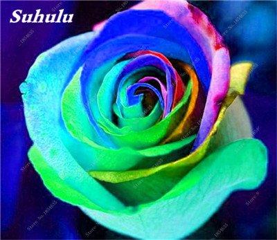 De nouvelles semences 2017! 24 Couleurs Rose Graines Plantes vivaces Rose pot de fleurs Graines cour et balcon extérieur Plant-150 Pcs 24