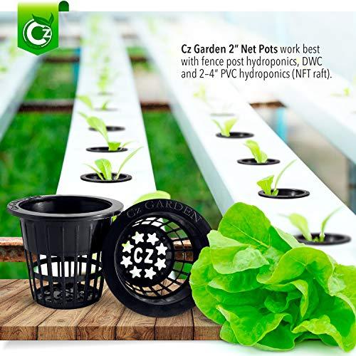 Cz Garden Net Cups
