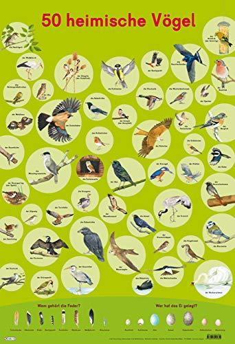 Mein Lernposter: VE 5 50 Heimische Vögel