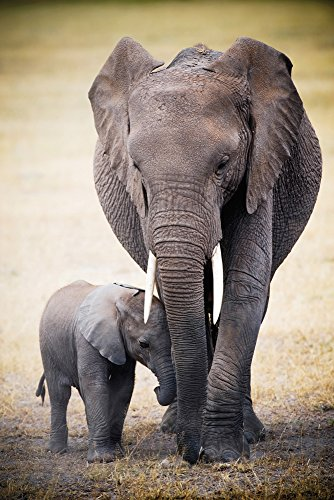Africa - Elephant and Baby - Poster Plakat Druck - Maxiposter Grösse 61x91,5 cm